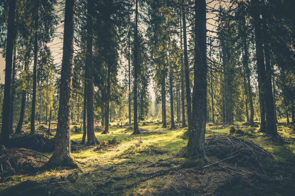 pacific spirit park vancouver hikes