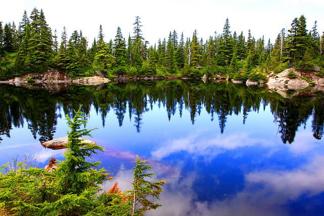 cabin lake swimming hole