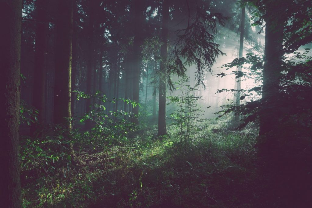 forest bathing in vancouver